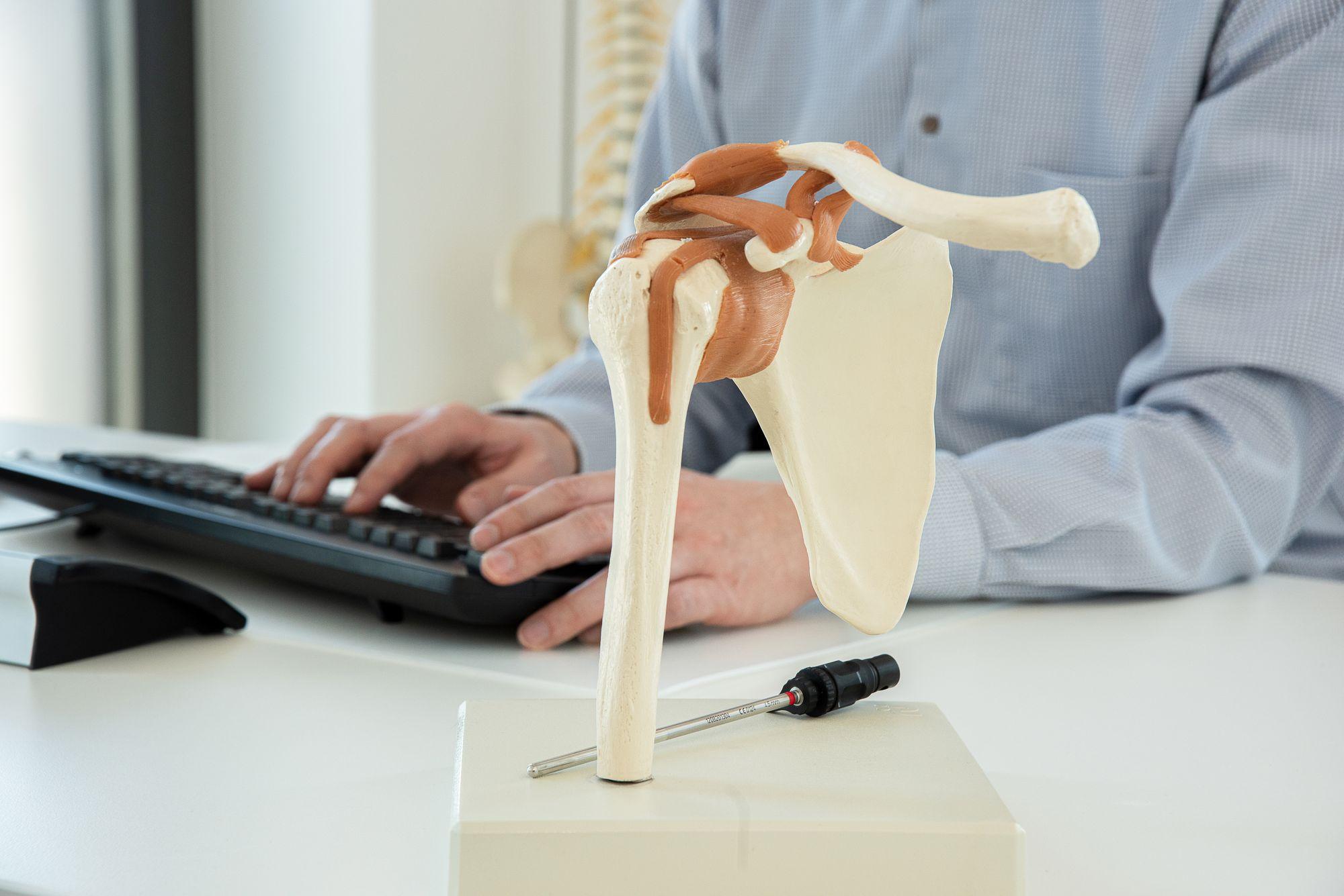 Gelenkmodell des menschlichen Körpers – Dr. med. Siebeneck Bielefeld